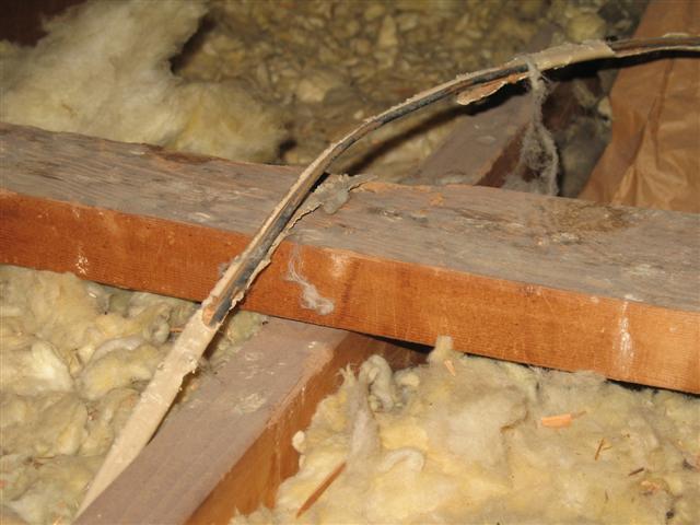 Squirrel damaged wiring