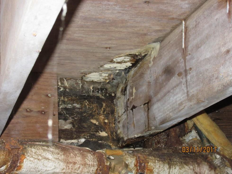 Rot, compressed floor joist, mold & fungi